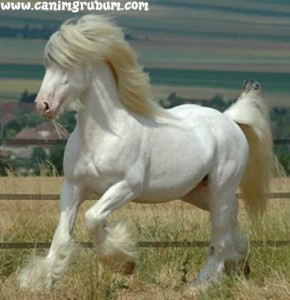 feathery light-coloured horse