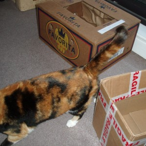 A tortoiseshell cat walking out of frame