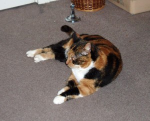 Tortoiseshell cat lying on the carpet, not completely relaxed but not afraid either