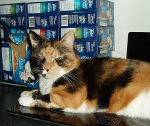 Tortoiseshell cat looking very smug in front of a stack of Felix cat food